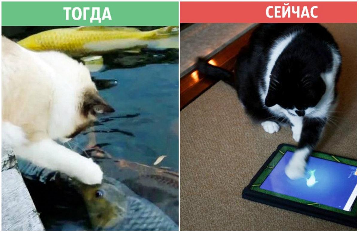 Ահա, թե ինչպես են ժամանակակից տեխնիկաները փոխել կատուների կյանքը (լուսանկարներ)