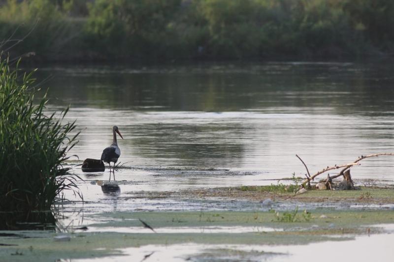 Քաղաքացին ահազանգում է Հրազդան գետում յուղային թափոնների առաջացման մասին