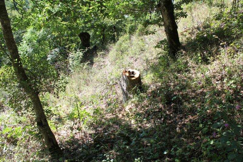 Ոստիկանները հայտնաբերել են անտառում կորած քաղաքացու դին