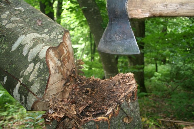 Ապօրինի անտառահատումների դեմ պայքարը շարունակվում է (ՏԵՍԱՆՅՈՒԹ)