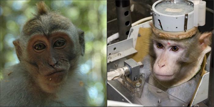 Ռուսաստանը կապիկներին Մարս կուղարկի