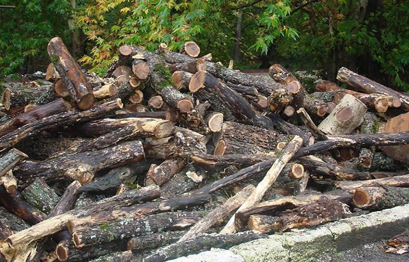Սեփական սղոցով հատել էր 57 ծառ, ձիով տեղափոխել «Հախոյի գոմեր»-ի տարածքի իր տնակ. վնասի չափը պարզվում է