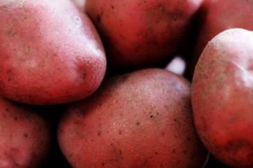 Կարմիր կարտոֆիլը նպաստում է արյան ճնշման իջեցմանը
