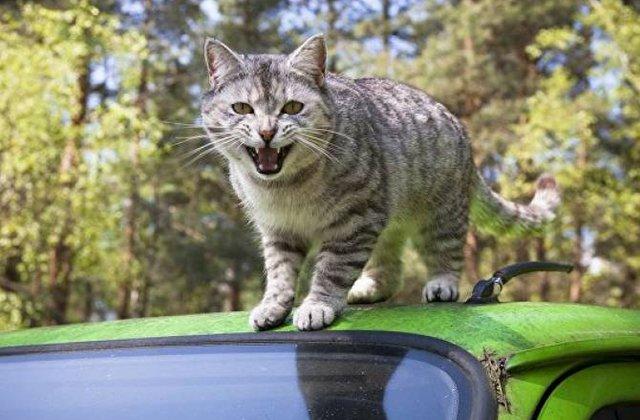 Բելգիայում տարեկան շուրջ 10000 կատու էվթանազիայի է ենթարկվում