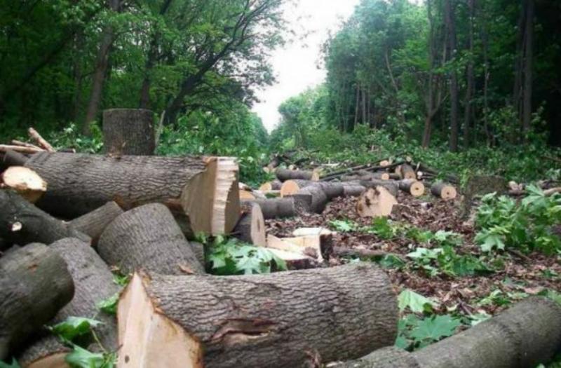 ՀՀ ոստիկանությունը բացահայտել է Որոտնավան գյուղում հարևանի ծառերը հատելու դեպքը