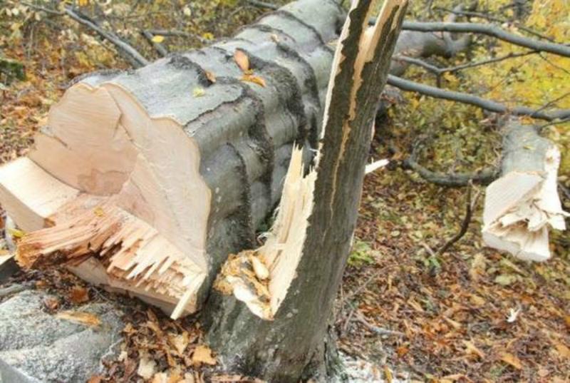 Սյունիքի մարզում ապօրինի անտառահատման դեպքեր են գրանցվել
