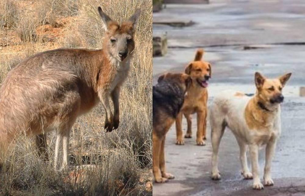 Շները եղել են լավ վարժեցված, պատկանել են կենդանաբանական այգու նախկին աշխատակիցներից մեկին. «Իրատես»