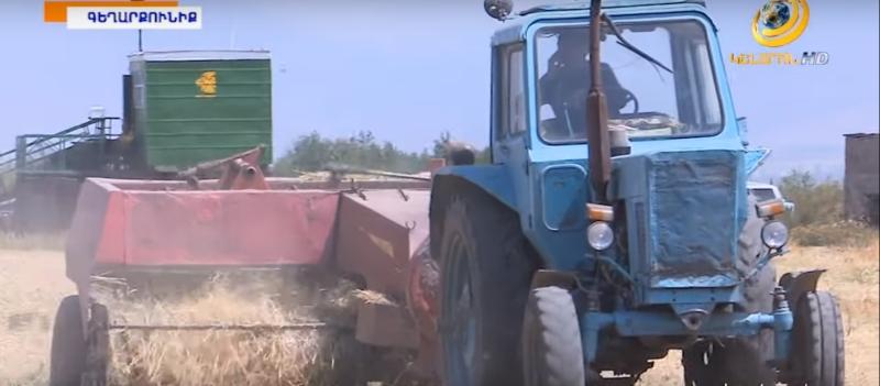 «Մուլտի ագրո»-ի ցորենի և գարու ցանքատարածություններում սկսվել է բերքահավաքը