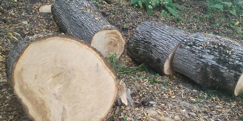 Բնապահպանության և ընդերքի տեսչական մարմնի աշխատակիցները հայտնաբերել են ապօրինի հատված 56 ծառ