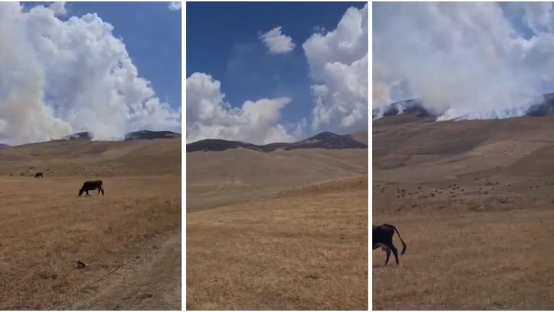 Ադրբեջանցիները մեր բնակիչների ողջ տարվա անասնակերը մի քանի ակնթարթում ոչնչացրել են. պատգամավոր (տեսանյութ)