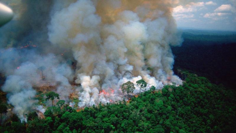 Երկրագնդի «թոքերն» այրվում են ռեկորդային արագությամբ