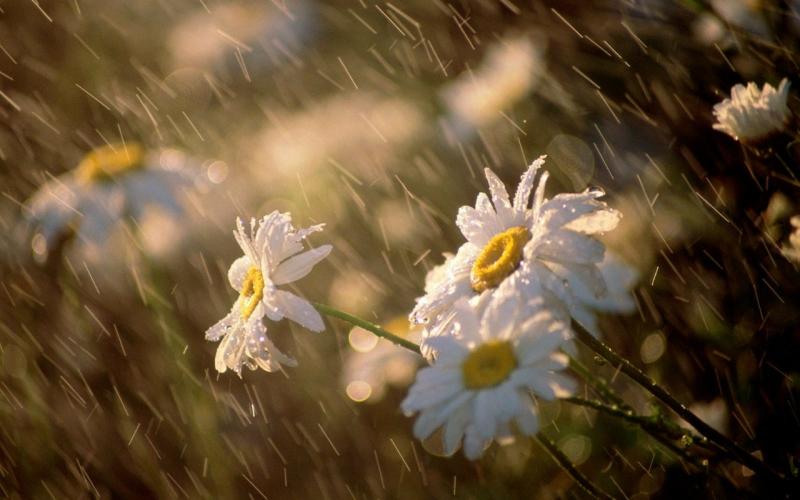 Առաջիկա մի քանի օրերին ՀՀ տարածքում շրջանների զգալի մասում սպասվում են անձրեւներ