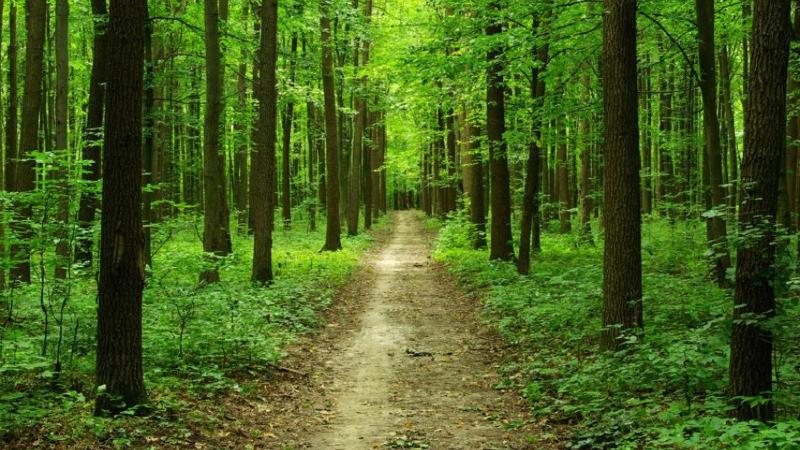 Նոր ծառայություն՝ անտառները պահպանելու համար. «Ժամանակ»