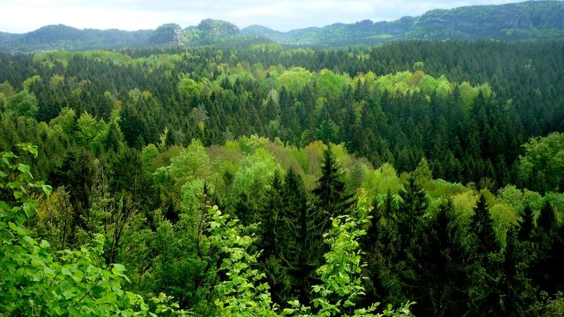 Հայաստանում ստեղծվում է անտառային պետական ծառայություն. «Հայաստանի Հանրապետություն»