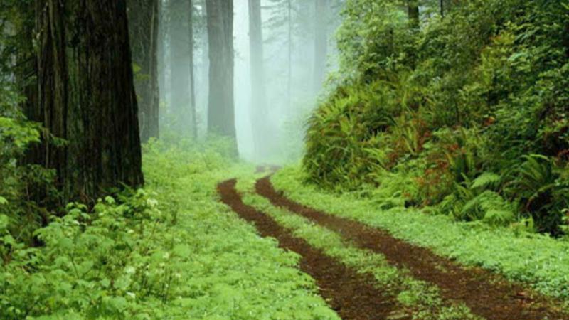 Բնակչուհին գնացել է անտառ և այլևս չի վերադարձել. հարուցվել է քրեական գործ