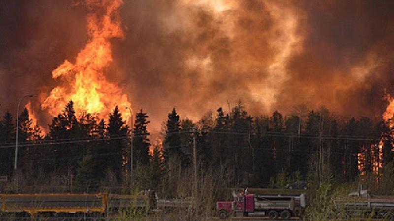 Եվրամիությունը եվրոպական երկրներին օգնություն ցույց կտա անտառային հրդեհների դեմ պայքարում