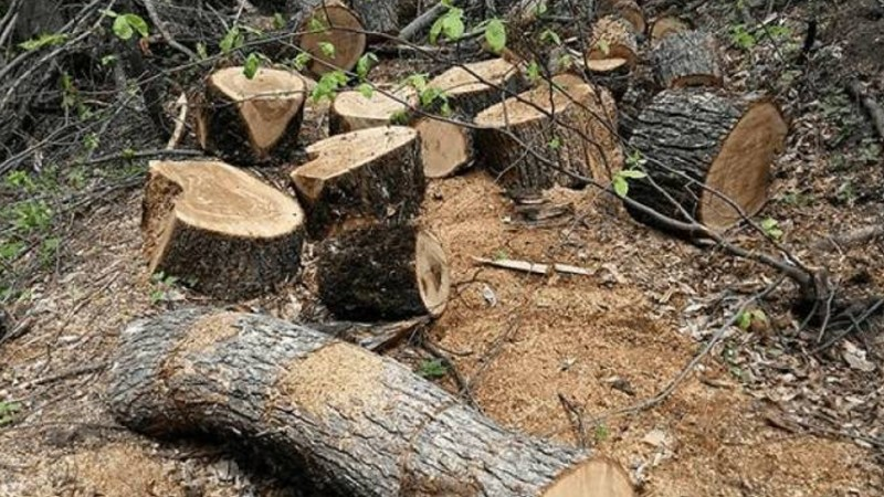 Տավուշի մարզում ապօրինի անտառահատումների հայտնաբերման դեպքերն ավելացել են