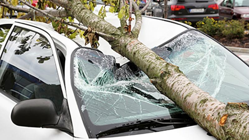 Վանաձորում ծառն ընկել է ավտոմեքենայի վրա. ԱԻՆ