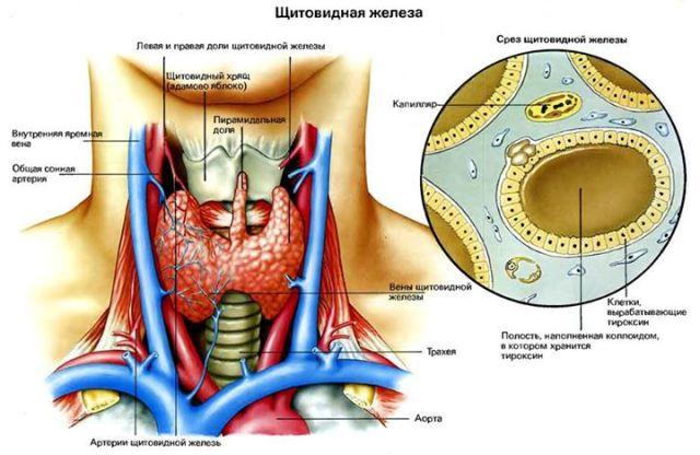 Օրգանիզմում յոդի անբավարարության հետևանքով ի հայտ են գալիս առողջության լուրջ խանգարումներ