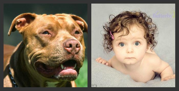 11 ամսական երեխային շունը պատառոտել է (լուսանկարներ)