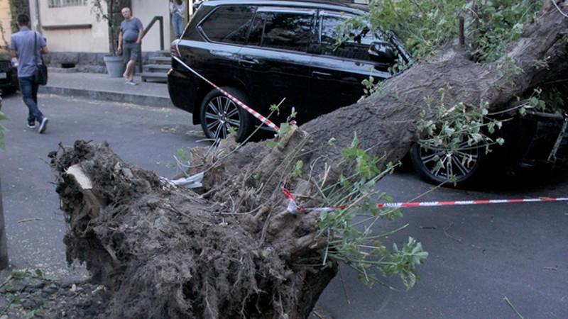 Ծառը կոտրվել է և ընկել ավտոմեքենաների վրա. ԱԻՆ