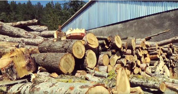 Անտառտնտեսության տնօրենը չարաշահել է պաշտոնեական դիրքն ու պաշտոնատար անձանց դրդել կեղծիքների. ՀՔԾ