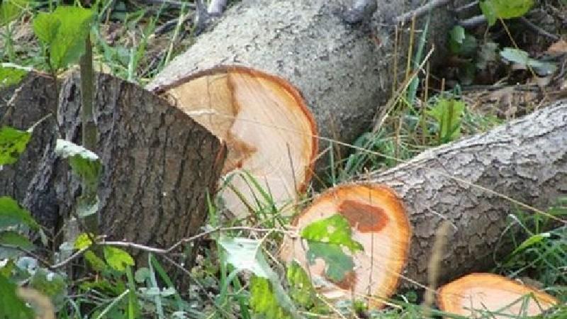 Քաղաքներում ծառերի հատումը կիրականացվի միայն համայնքի ղեկավարի թույլտվությամբ