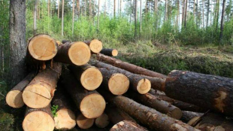 Ապօրինի անտառահատումների բազմաթիվ դեպքեր Արփի լիճ ազգային պարկում. մարզի դատախազի կողմից միջնորդագրեր են ներկայացվել