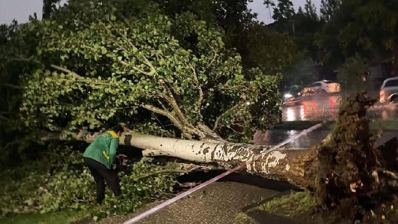 Երևանի Բաղրամյան պողոտայում ուժեղ քամու հետևանքով ծառը կոտրվել և ընկել է