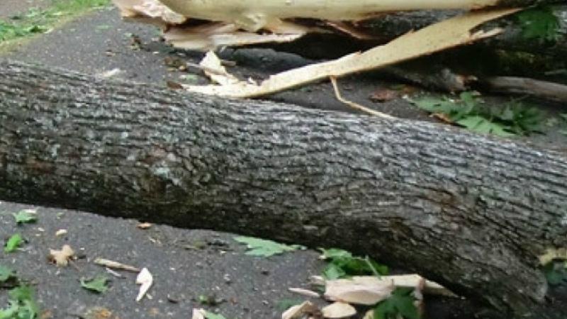 Վանաձոր-Ստեփանավան ավտոճանապարհից փրկարարները հեռացրել են ընկած ծառերը