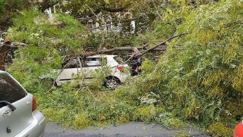 Աքորիում քամու հետևանքով ծառն ընկել է մեքենաների վրա