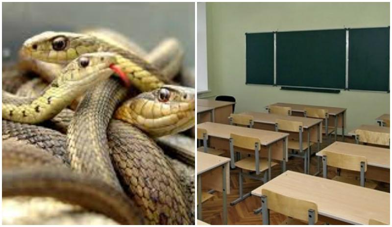 13 օձ է հայտնաբերվել Բերդիկ գյուղի դպրոցում
