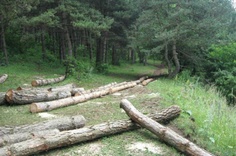 6 անձ ձերբակալվել է Ստեփանավանի անտառտնտեսության մասնաճյուղում կատարված չարաշահումների գործով. ՔԿ