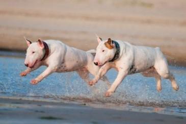Շների ամենատգեղ տեսակները