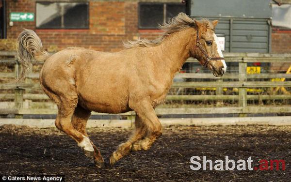 Սատկել է աշխարհի ամենածեր ձին