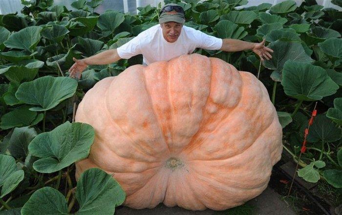 Աշխարհի ամենամեծ բանջարեղենները.լուսանկարներ