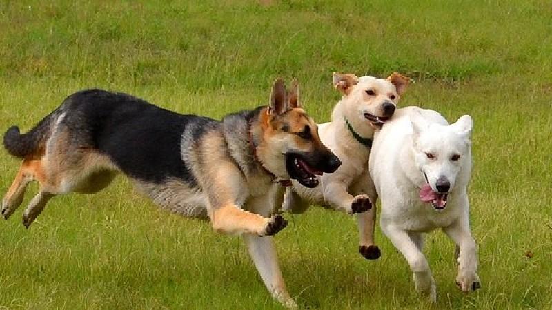 Երևանի բոլոր վարչական շրջաններում ընտանի շների համար կստեղծվեն հատուկ զբոսայգիներ