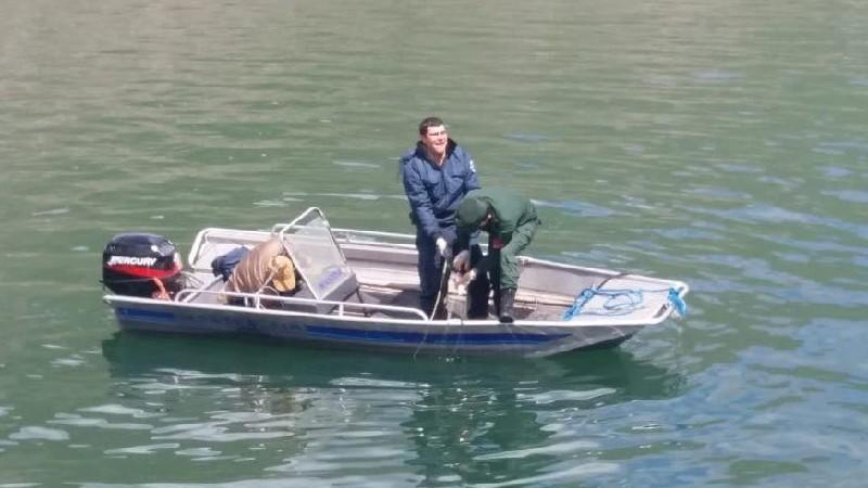 Սևանա լճից դուրս են բերել մանրաձուկ որսալու 25 և խեցգետին որսալու 19 ապօրինի ցանց. ՇՄՆ