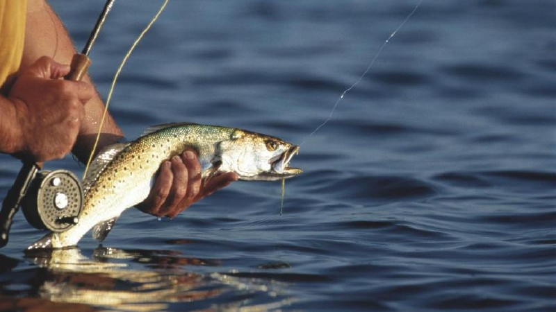 Քաղաքացին զբաղվել է  ձկնաբուծությամբ առանց ջրօգտագործման թույլտվության. Հարուցվել է վարույթ