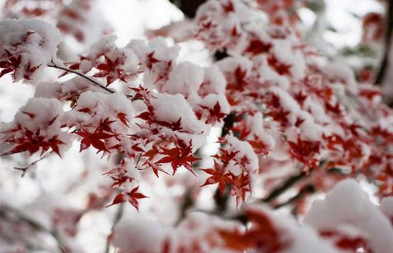 Դեկտեմբերը կլինի սովորականից տաք․ Գագիկ Սուրենյան