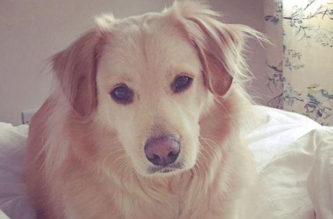 7 ամիս բաժանումից հետո տիրուհու հետ շան հանդիպման տեսագրությունը 14 մլն մարդ Է դիտել (տեսանյութ)