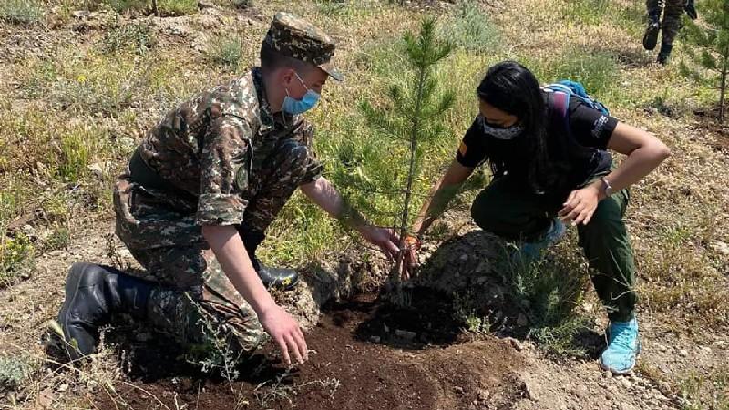 Օտարերկրացի ապագա բժիշկները 100 +33 ծառ տնկեցին «Եռաբլուր» զինվորական պանթեոնում (լուսանկարներ)