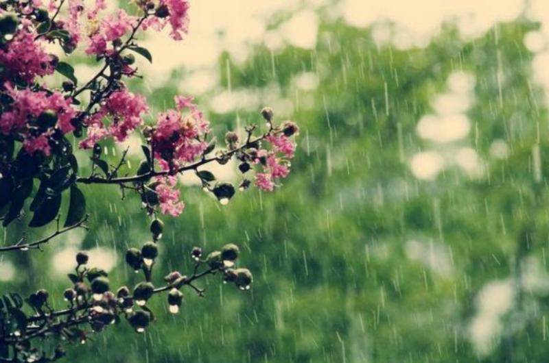 Հունիսի 13-18-ը` կեսօրից հետո, շրջանների զգալի մասում սպասվում է կարճատև անձրև և ամպրոպ. ջերմաստիճանն էապես չի փոխվի