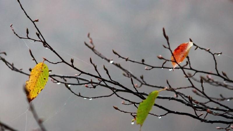 Օդի ջերմաստիճանն աստիճանաբար կնվազի 6-9 աստիճանով