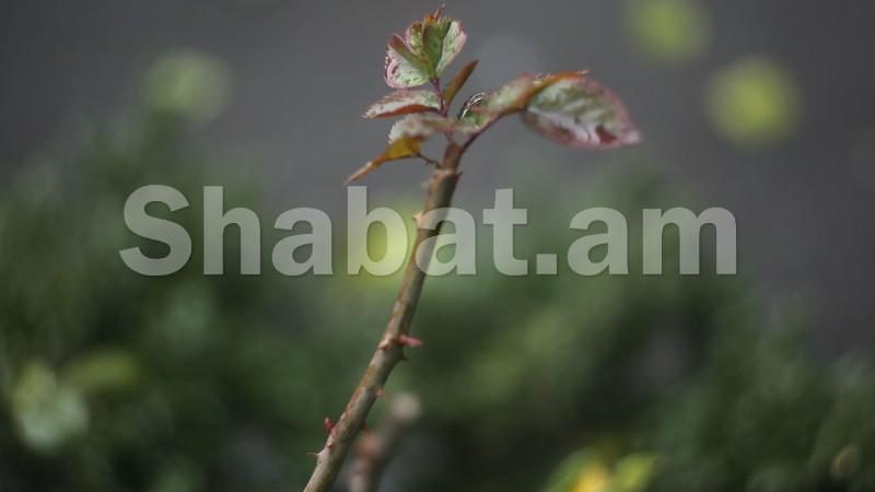 Մայիսի 22-ին հյուսիսային շրջաններում կեսօրից հետո սպասվում է կարճատև անձրև և ամպրոպ, առանձին վայրերում նաև կարկուտ