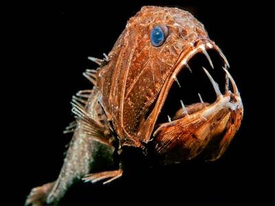Օվկիանոսի խորքի անհայտ տիրակալները, որոնց դուք երբեք չեք հանդիպի  (լուսանկարներ)