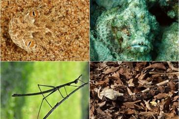 Զարմանահրաշ կենդանիներ, որոնք քողարկվում են բնության մեջ.լուսանկարներ