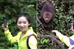 Ինչպես է կապիկը լուսանկարվելուց հետո զբոսաշրջիկի ձեռքից խլում է բջջայինը (տեսանյութ)