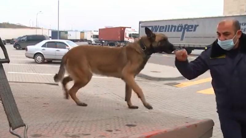 Ծառայողական շները սեպտեմբերից հսկում են Բագրատաշենի անցակետով բեռնատարների հոսքը (տեսանյութ)