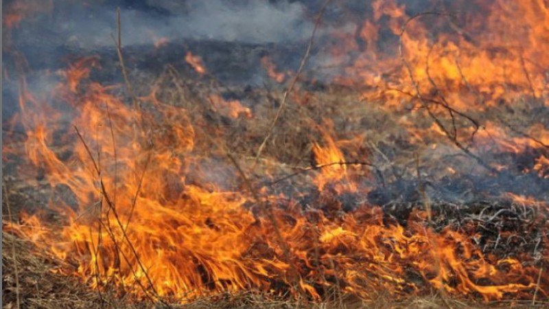 Սասունիկ գյուղում այրվել է մոտ 23 հա խոտածածկ տարածք